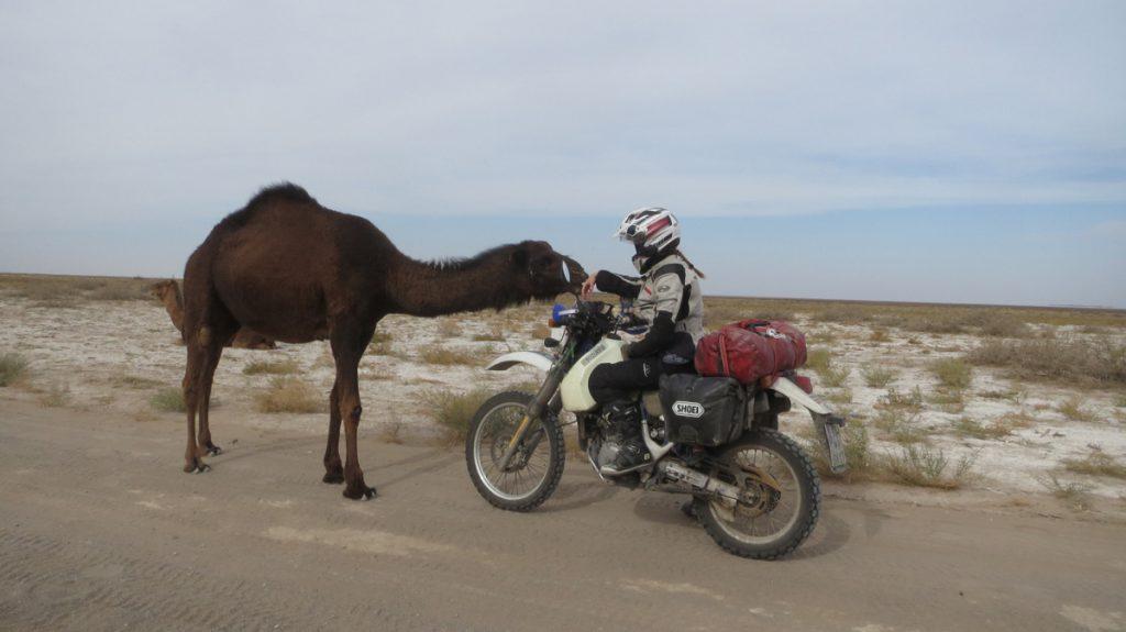 Silke-Motorrad-Suzuki-Wueste-Kamel