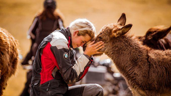 Auf Motorradtour mit Esel. Bild: Andy Balaz